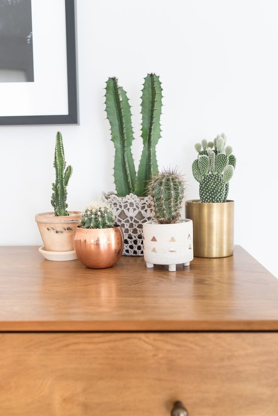 Best House Plants for Black Thumbs - Cactus