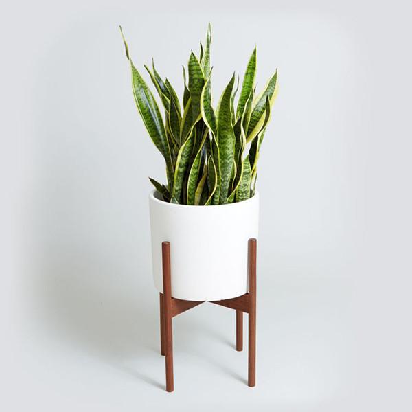 Best House Plants for Black Thumbs - Snake Plant