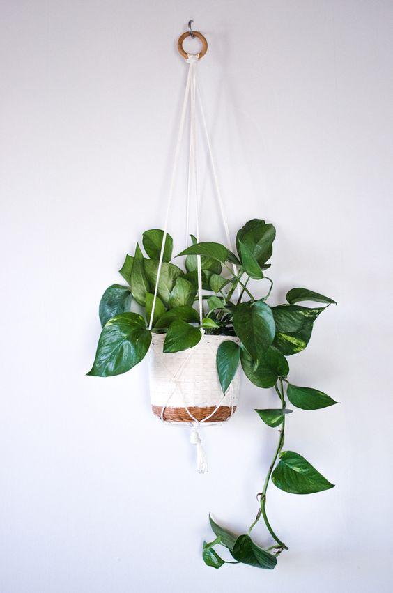 Best House Plants for Black Thumbs - Pothos Plant