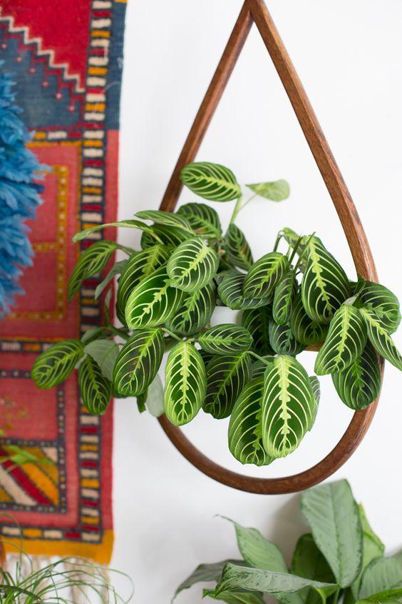 Best House Plants for Black Thumbs - Prayer Plant