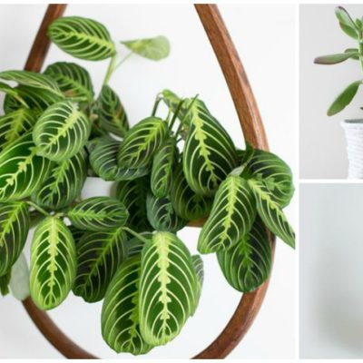 9 HARD-TO-KILL HOUSEPLANTS FOR EVERY BLACK THUMB