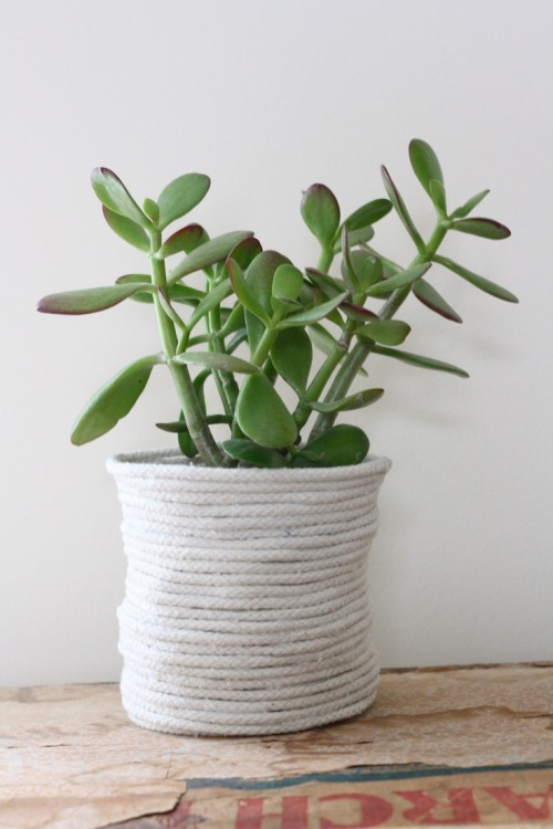 Best House Plants for Black Thumbs - Jade Plant